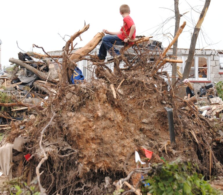 boy on uprooted tree